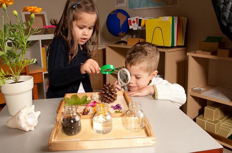 crianças-com-lupas-analisando-pinhos